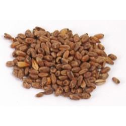 Cara-Wheat
