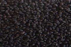 Wheat Chocolate malt